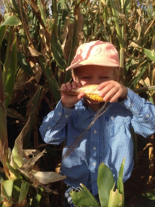 Trevor eats corn
