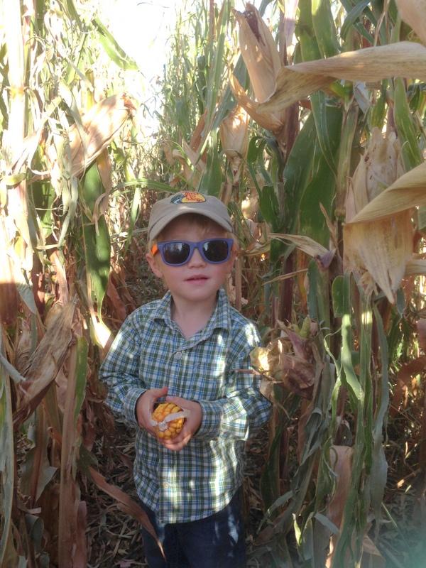 trevor checking corn