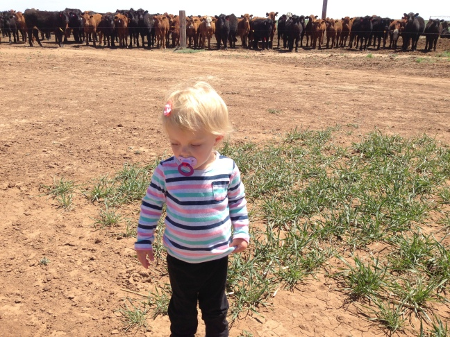 Claire with cows
