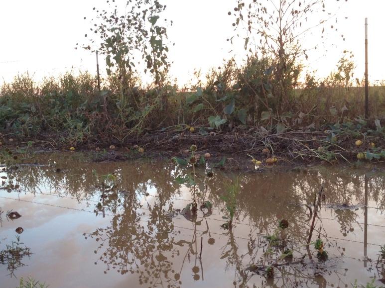 ditch lake